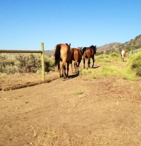 Horses track